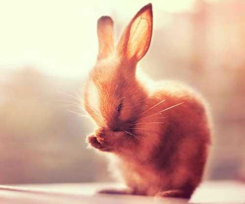 di truyền tính trạng màu lông thỏ