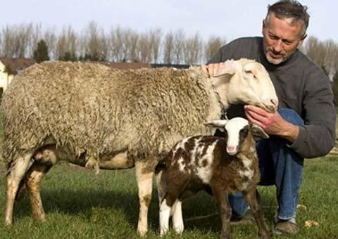 tham số di truyền tính trạng số lượng ở cừu