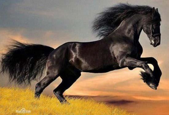 di truyền tính trạng số lượng ở ngựa